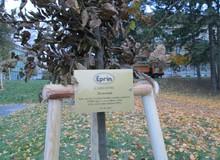 Náš zasazený strom. Děkujeme